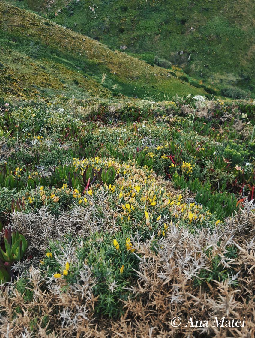 Cabo-da-Roca-landscape
