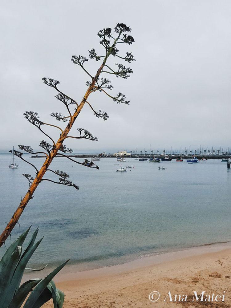 Cascais Beach, Portugal