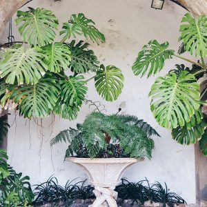 Pena-Palace-Sintra---garden