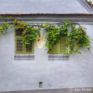 Autumn in Viscri, grapes and windows