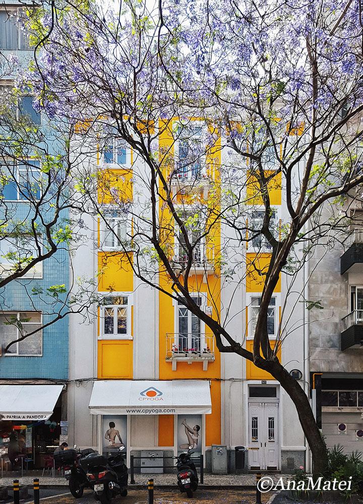 Lisbon Facades with Jacaranda