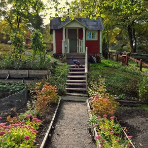 skansen-tiny-farmer-house-and-peacock