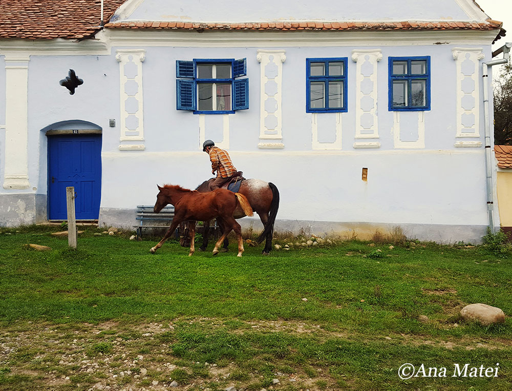 viscri-village-horses