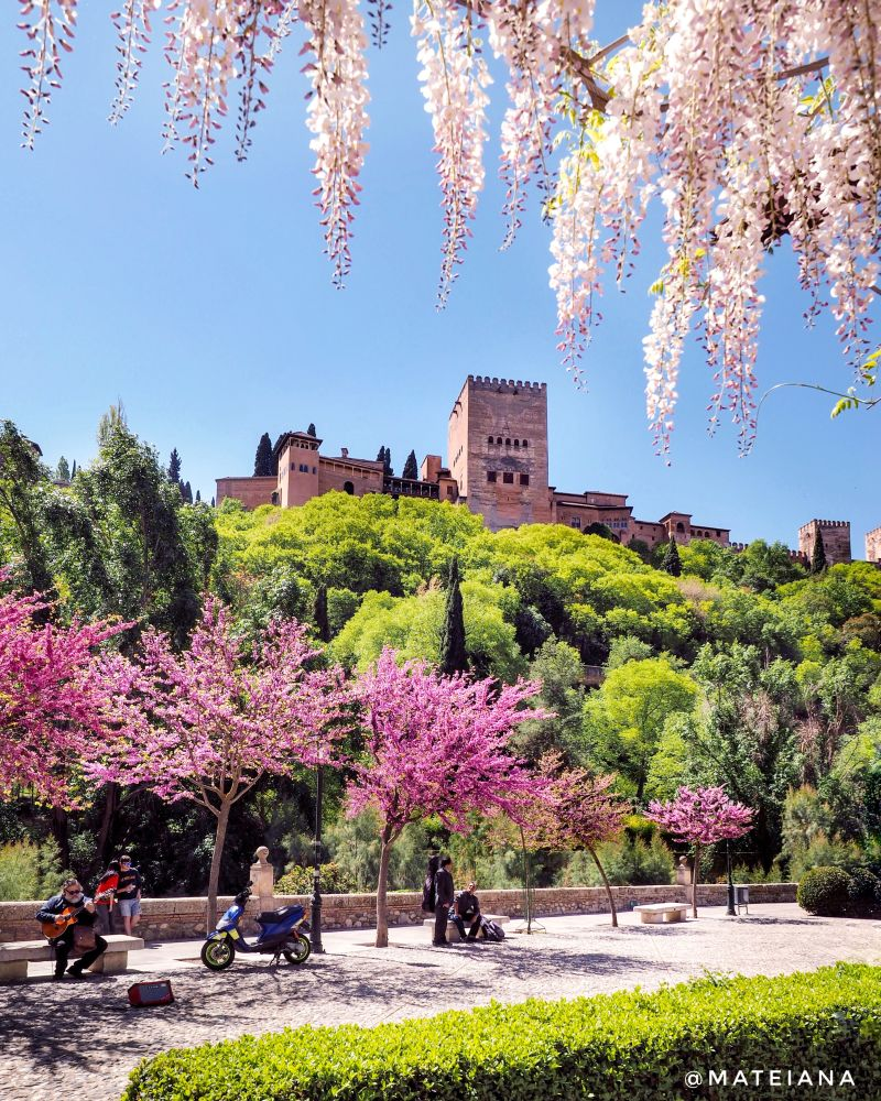 Postcard from Granada with wisteria frame