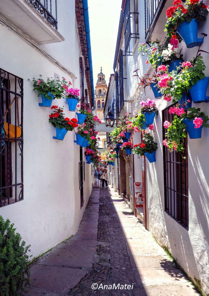 Calleja-de-las-Flores-in-Cordoba,-Spain