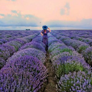 Ana-in-Lavender-Field,-Bulgaria