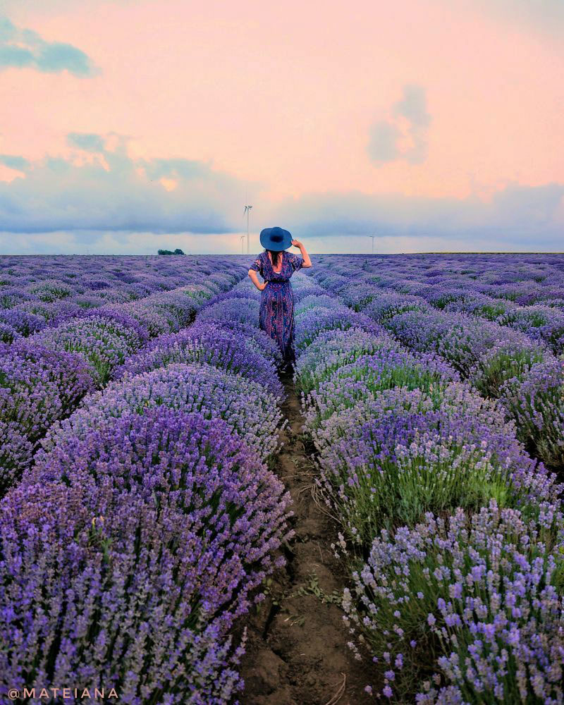 Ana-in-Lavender-Field,-Bulgaria