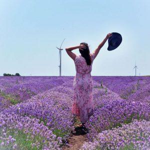 Lavender-Fields-in-Bulgaria,-Black-Sea-Coast