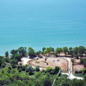 horses-at-the-Thracian-Cliffs-Resort---Bulgarian-seaside