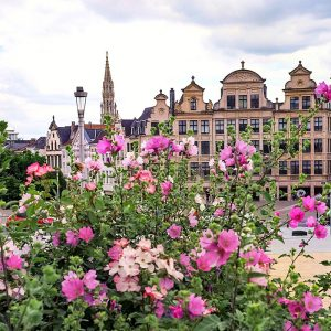 Mont des Arts Brussels - flowers