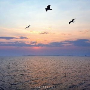 seagulls-at-sunset-on-Thassos-ferry-boat