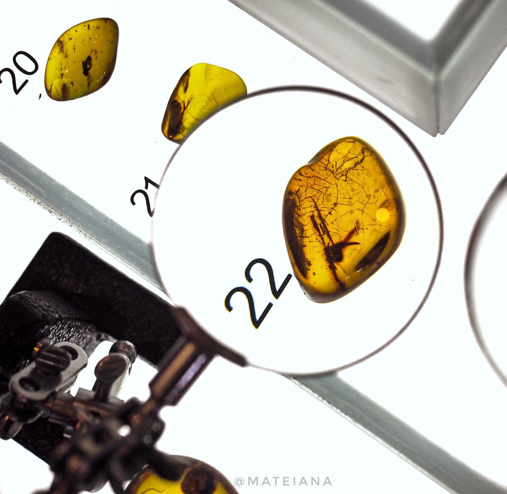 Insect-Amber-Inclusion---Amber-Museum-Gdansk