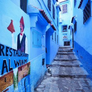 Blue-Streets-of-Chefchaouen---cats