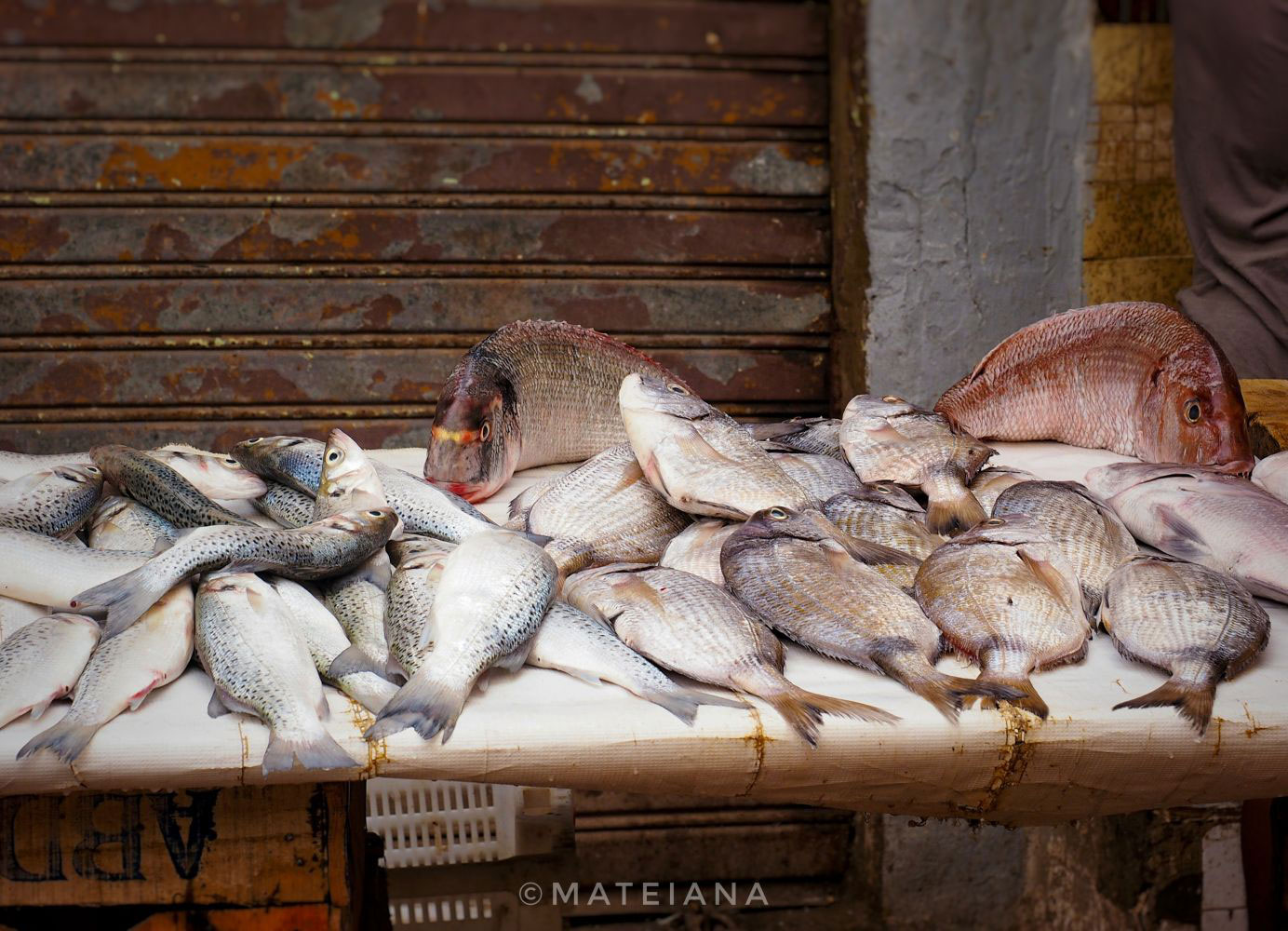 Fish-in-the-souk-of-Rabat-Medina