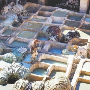 Fez-Tannery---Chouara-Tannery-Morocco