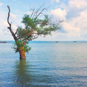 Lonely-mangrove-tree-on-East-Railay-Beach