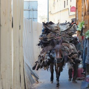 Mule-carrying-dead-animal-skins-near-Fez-Tannery,-Morocco2