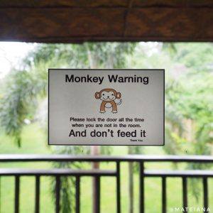 monkey-warning-in-our-room
