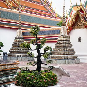 Wat-Pho-Bangkok---chedis-and-bonsai-trees