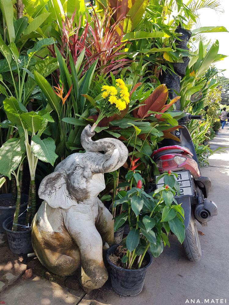 cute-elephant---Chiang-Mai-Flower-Market