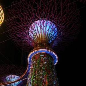 SuperTree-Grove-Light-and-Music-Show-in-Singapore