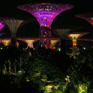 SuperTree-Light-Show-at-Gardens-by-the-Bay-in-Singapore